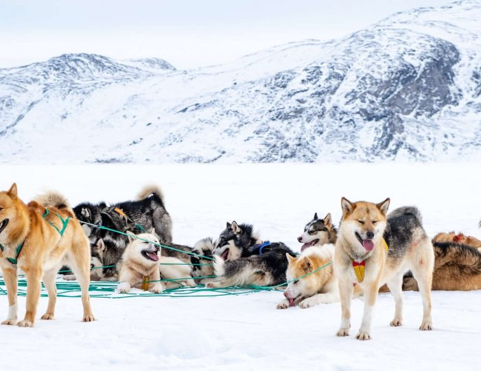 4-hour-dog-sledding-tour-kangerlussuaq-west-greenland - Guide to Greenland2