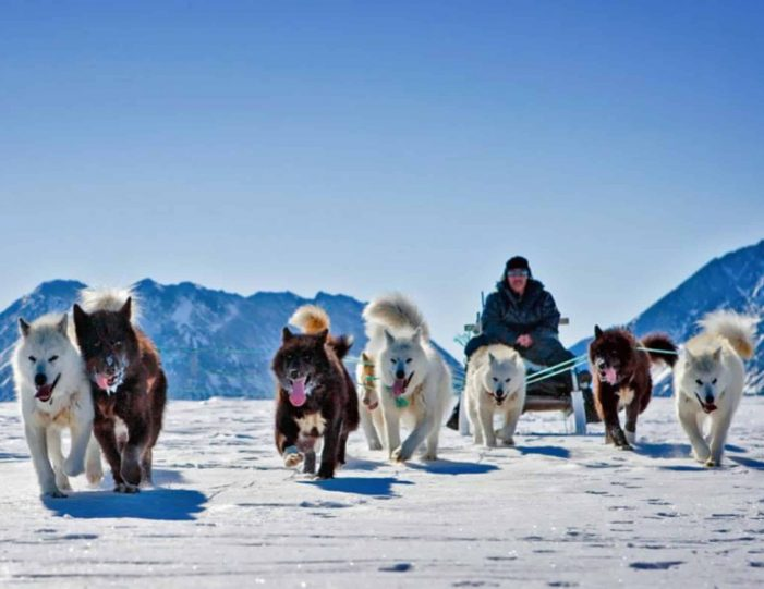 4-hour-dog-sledding-tour-kangerlussuaq-west-greenland - Guide to Greenland4