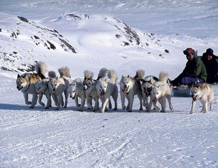4-hour-dog-sledding-tour-kangerlussuaq-west-greenland - Guide to Greenland6