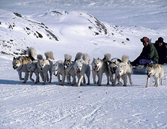 4-hour-dog-sledding-tour-kangerlussuaq-west-greenland - Guide to Greenland6