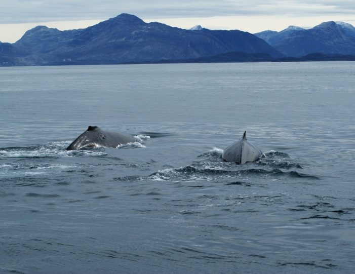 Boat charter Nuuk West Greenland - Guide to Greenland5