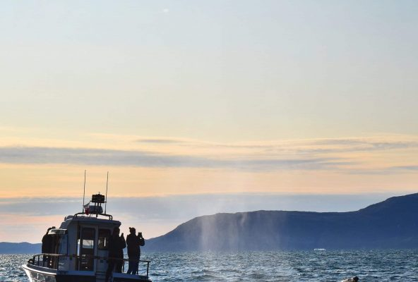 Boat-tour-in-Nuuk-Fjord-with-icebergs-and-whales-Guide-to-Greenland-Gabriela4
