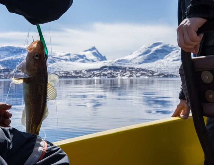 Deep Sea Fishing | Nuuk - Guide to Greenland2