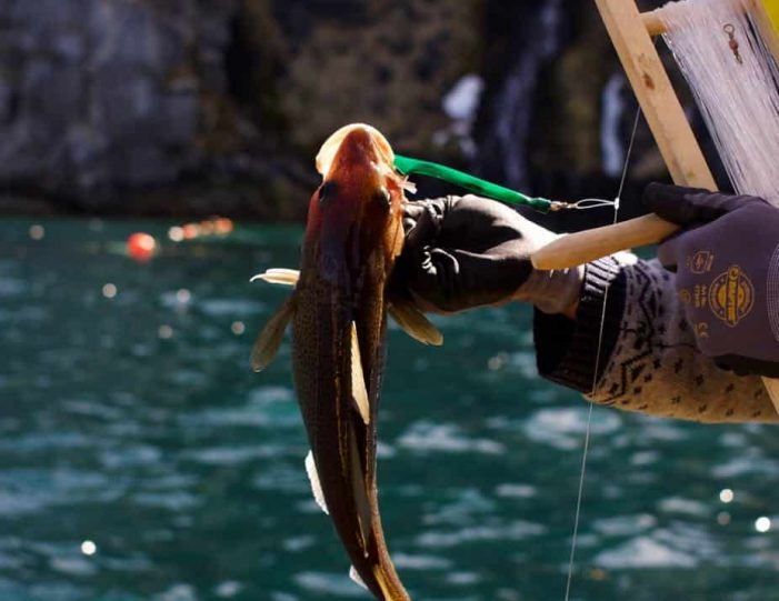 Deep Sea Fishing | Nuuk - Guide to Greenland3