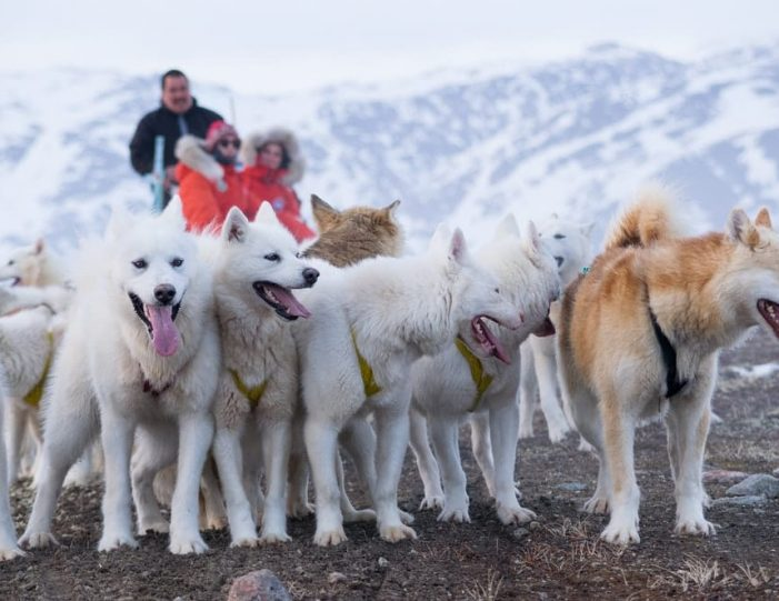 Discover Dogsledding Sisimiut - Guide to Greenland2
