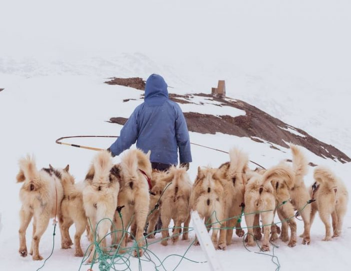 Discover Dogsledding Sisimiut - Guide to Greenland8
