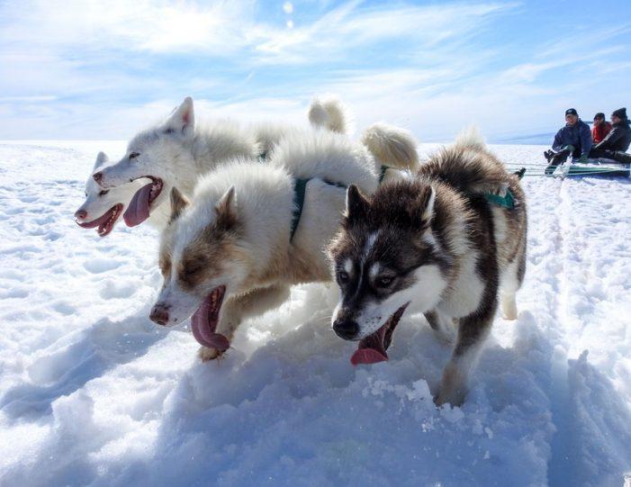 Dogsledding 2 hours Uummannaq North Greenland - Guide to Greenland10