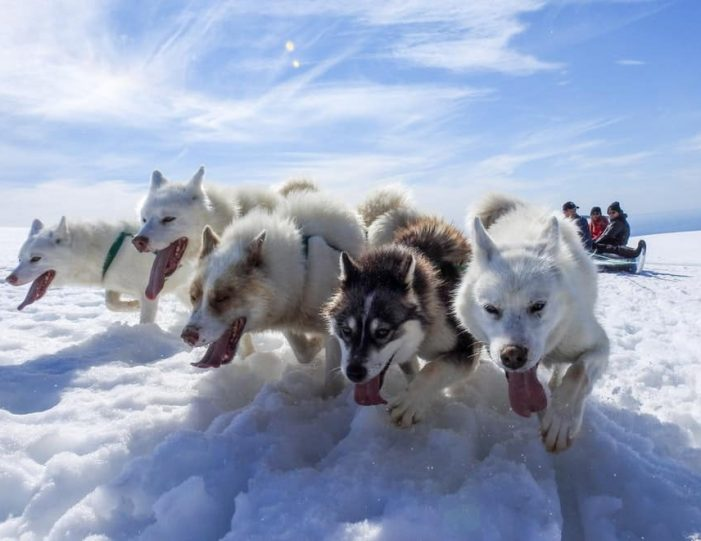 Dogsledding 2 hours Uummannaq North Greenland - Guide to Greenland12