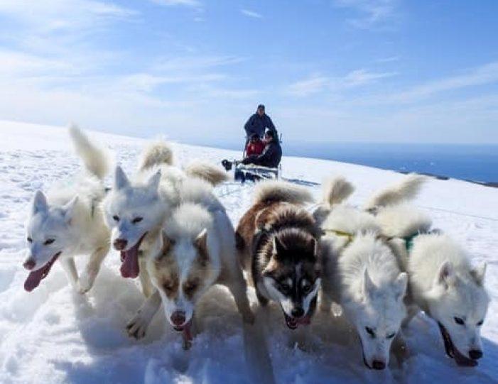 Dogsledding 2 hours Uummannaq North Greenland - Guide to Greenland3