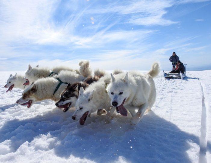 Dogsledding 2 hours Uummannaq North Greenland - Guide to Greenland8