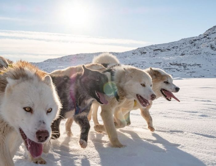 Dogsledding 4 hours Uummannaq North Greenland - Guide to Greenland3