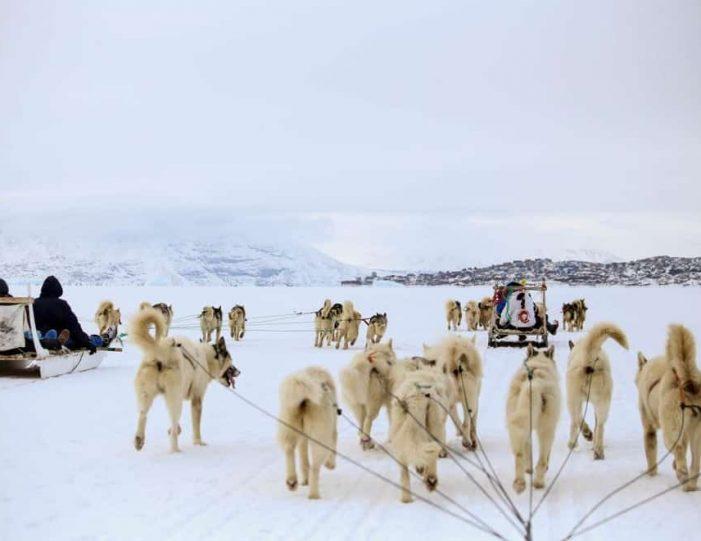 Dogsledding 4 hours Uummannaq North Greenland - Guide to Greenland4