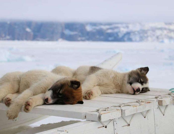 Dogsledding 4 hours Uummannaq North Greenland - Guide to Greenland7