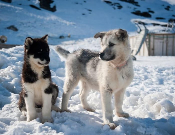 Dogsledding 4 hours Uummannaq North Greenland - Guide to Greenland8