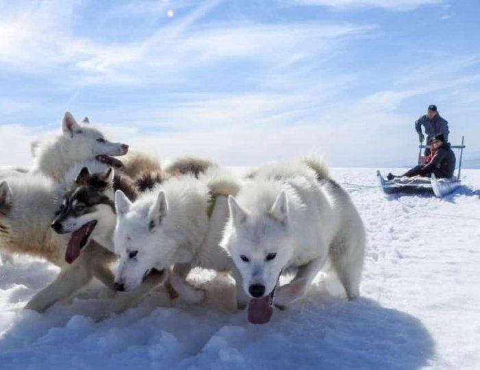 Dogsledding 4 hours Uummannaq North Greenland - Guide to Greenland9