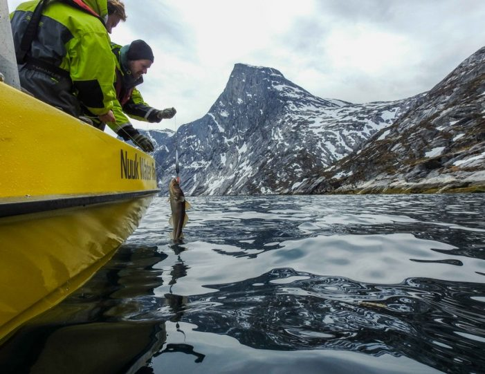 Fishing for cod Nuuk West Greenland - Guide to Greenland2