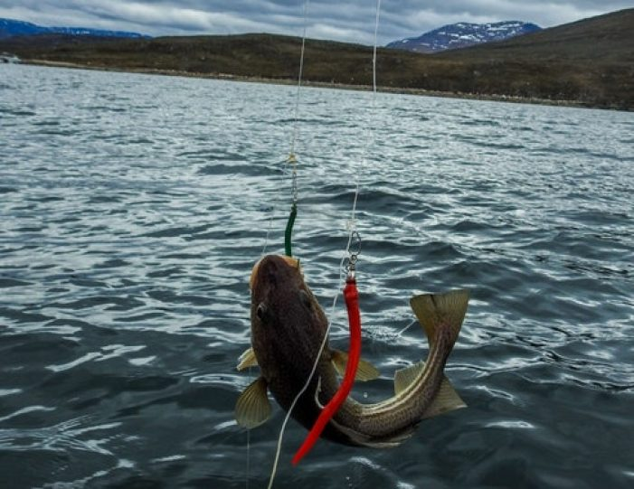 Fishing for cod Nuuk West Greenland - Guide to Greenland6