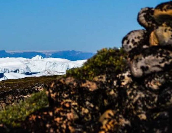Hike The Arctic Tundra | Ilimanaq | Disko Bay - Guide to Greenland8