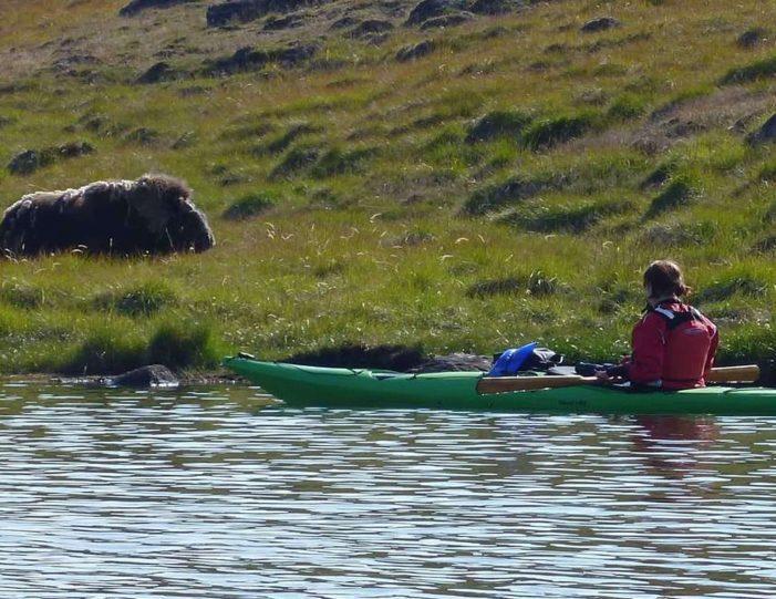 Hiking, Kayaking & Camping   Musk Ox Lake   Kangerlussuaq - Guide to Greenland15