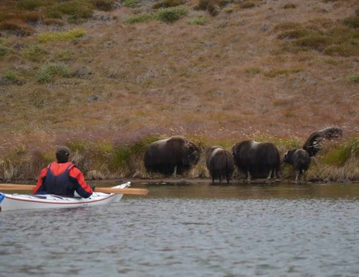 Hiking, Kayaking & Camping   Musk Ox Lake   Kangerlussuaq - Guide to Greenland7
