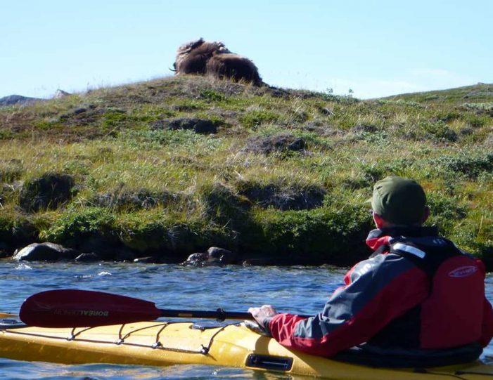 Hiking, Kayaking & Camping   Musk Ox Lake   Kangerlussuaq - Guide to Greenland8