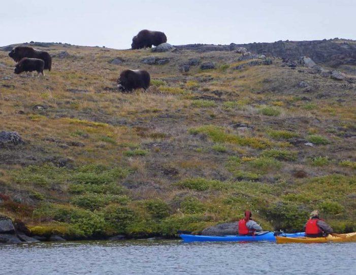 Hiking, Kayaking & Camping   Musk Ox Lake   Kangerlussuaq - Guide to Greenland9
