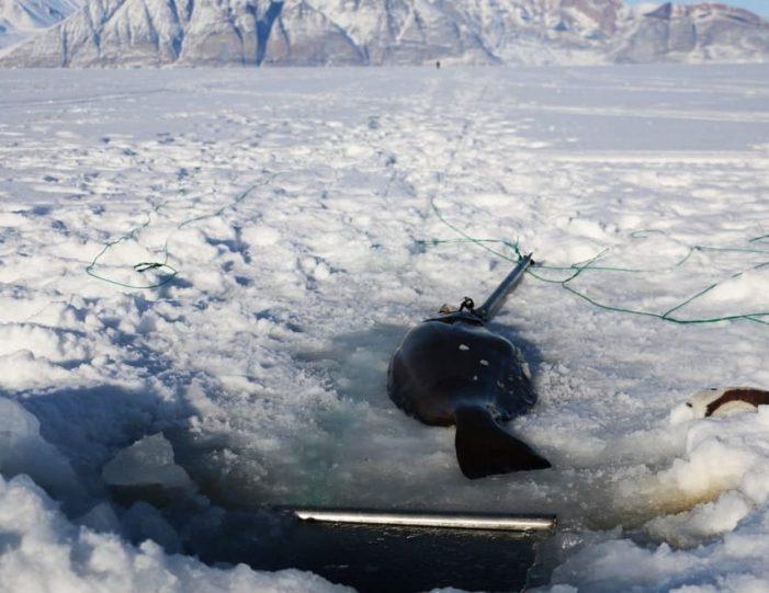Ice fishing Uummannaq North Greenland - Guide to Greenland1