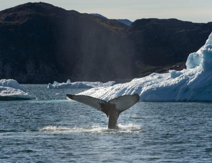 Iceberg cruise & Ice cave exploring | Tasiilaq | East Greenland - Guide to Greenland5
