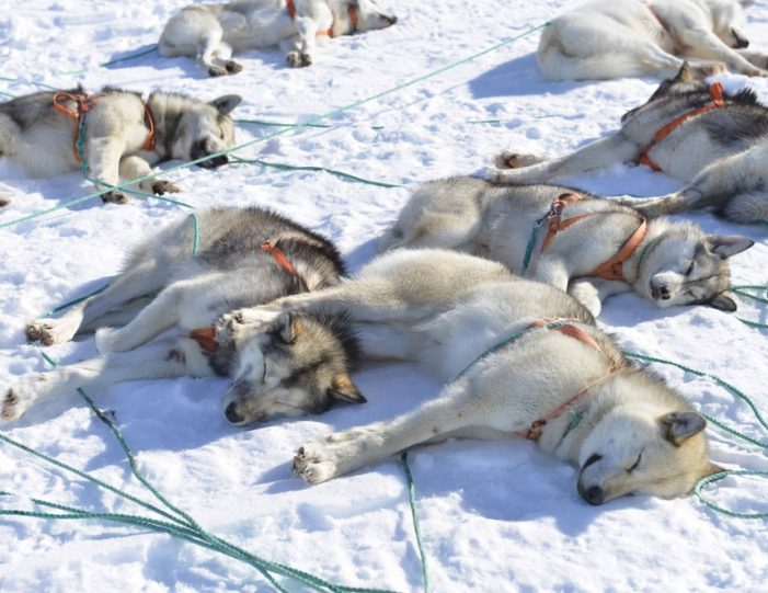Multi-day Dogsledding from Tasiilaq East Greenland - Guide to Greenland18