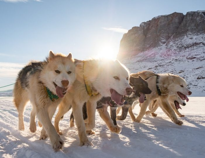 Multi-day Dogsledding from Tasiilaq East Greenland - Guide to Greenland2
