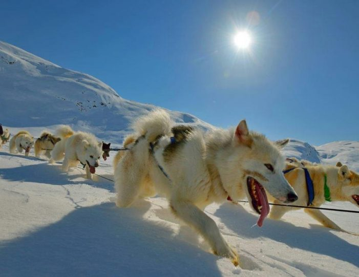 Multi-day Dogsledding from Tasiilaq East Greenland - Guide to Greenland21