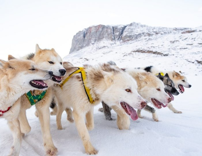 Multi-day Dogsledding from Tasiilaq East Greenland - Guide to Greenland3