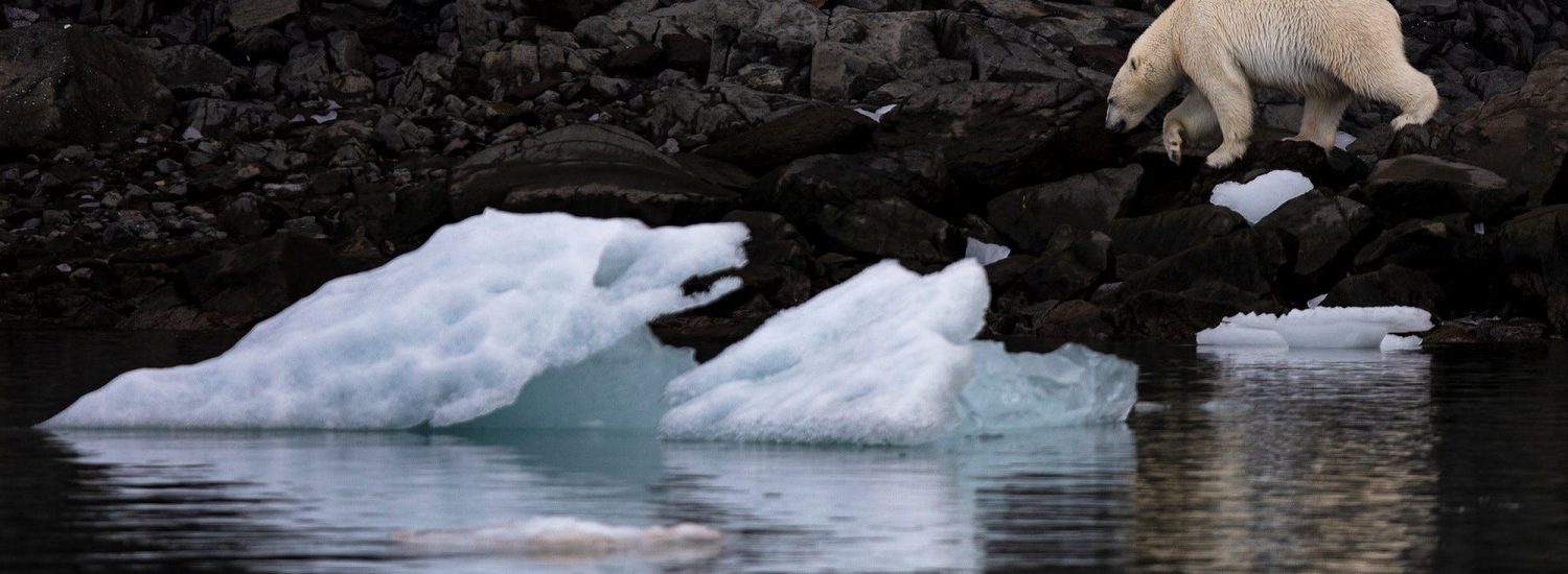 Polar bears at their Arctic Kingdom - Guide to Greenland1