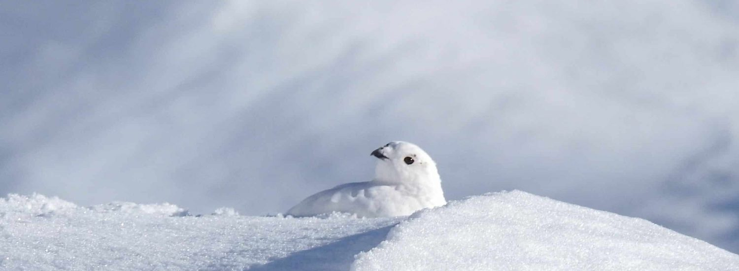 Ptarmigan hunting and why I love the fall in Nuuk! - Guide to Greenland7