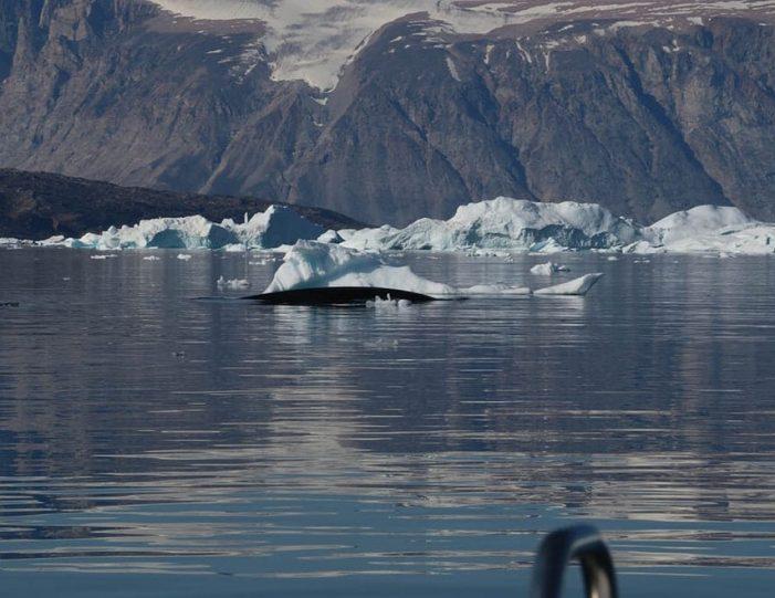 Qarajaq Glacier | Private tour | Uummannaq | North Greenland-Guide to Greenland6