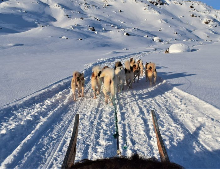 Settlement Tour By Dogsled | Tasiilaq | East Greenland - Guide to Greenland7