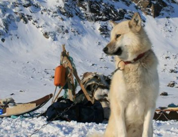 Two-day-dog-sled-adventure-kangerlussuaq - Guide to Greenland8