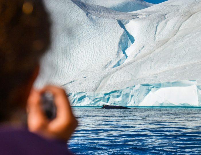 Whale Watching Uummannaq North Greenland - Guide to Greenland2