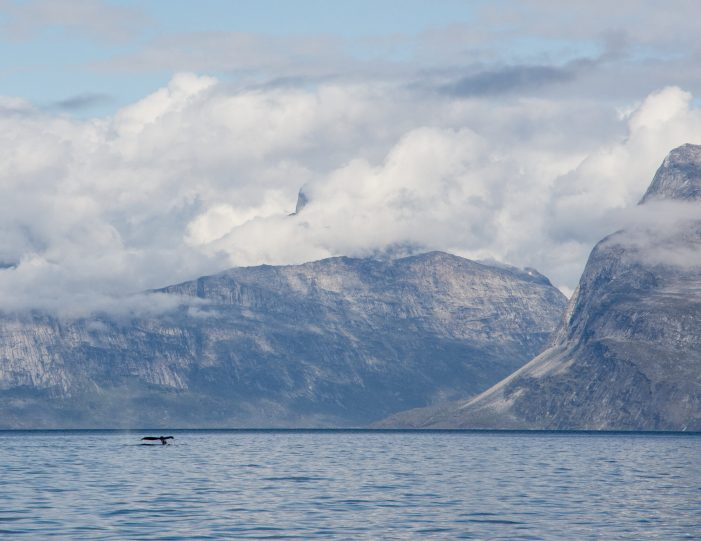 Whale tale and mountains in Nuuk fjord- Boat tour- Guide to Greenland