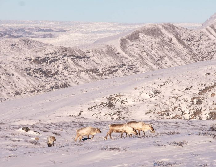 Winter-adventure-package-kangerlussuaq-sisimiut - Guide to Greenland16