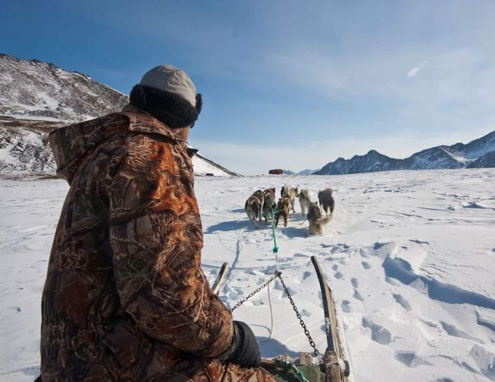 arctic-wildlife-safari-8-days-ittoqqortoormiit-east-greenland-Guide to Greenland1