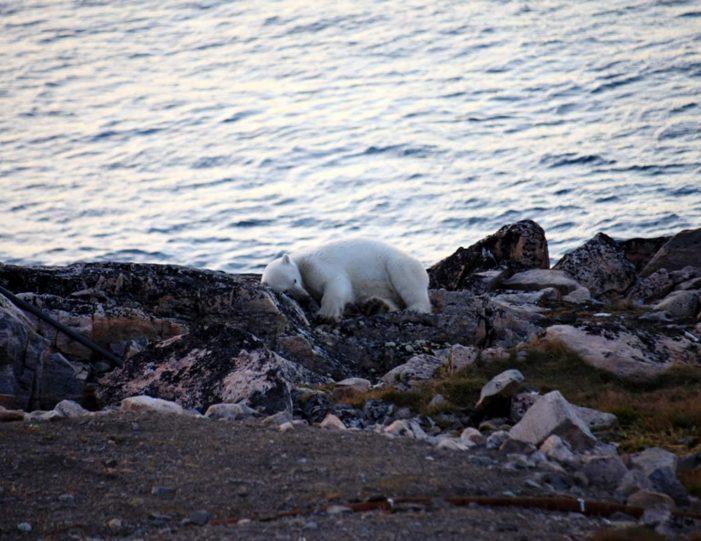 arctic-wildlife-safari-8-days-ittoqqortoormiit-east-greenland-Guide to Greenland10