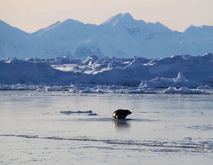 arctic-wildlife-safari-8-days-ittoqqortoormiit-east-greenland-Guide to Greenland16