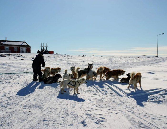 arctic-wildlife-safari-8-days-ittoqqortoormiit-east-greenland-Guide to Greenland18
