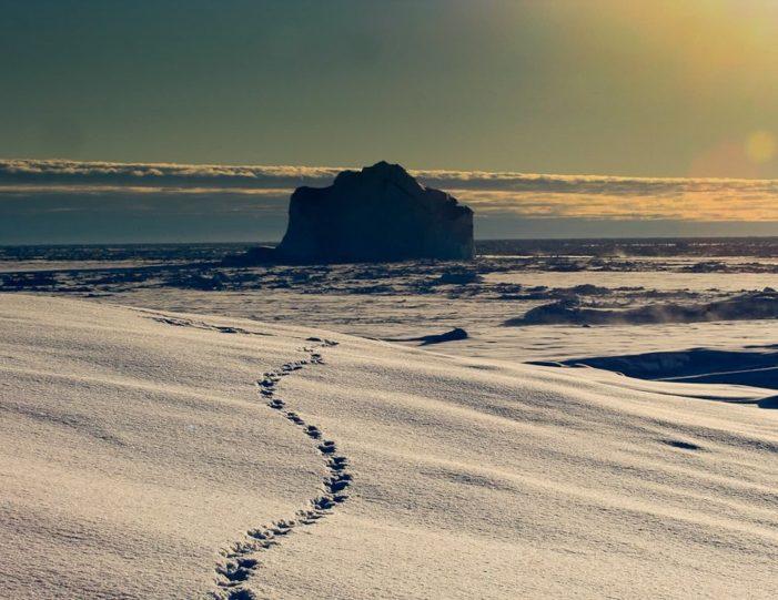 arctic-wildlife-safari-8-days-ittoqqortoormiit-east-greenland-Guide to Greenland19