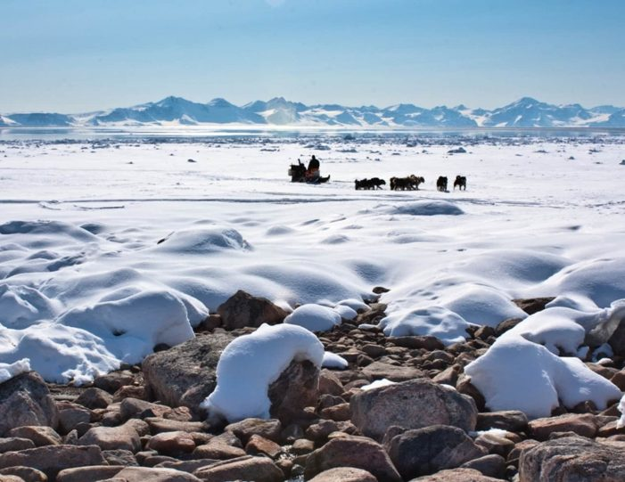 arctic-wildlife-safari-8-days-ittoqqortoormiit-east-greenland-Guide to Greenland2