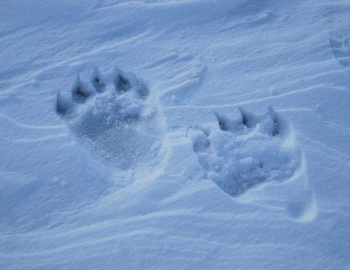 arctic-wildlife-safari-8-days-ittoqqortoormiit-east-greenland-Guide to Greenland3