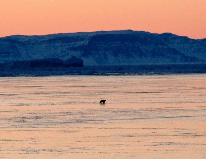arctic-wildlife-safari-8-days-ittoqqortoormiit-east-greenland-Guide to Greenland31