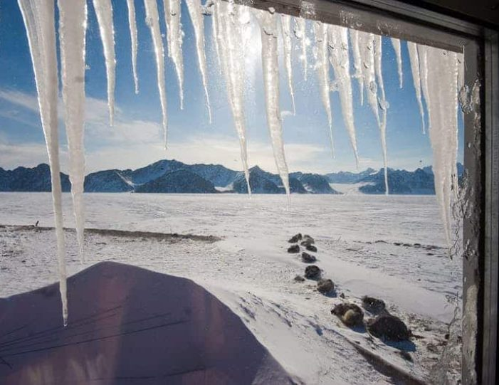 arctic-wildlife-safari-8-days-ittoqqortoormiit-east-greenland-Guide to Greenland35