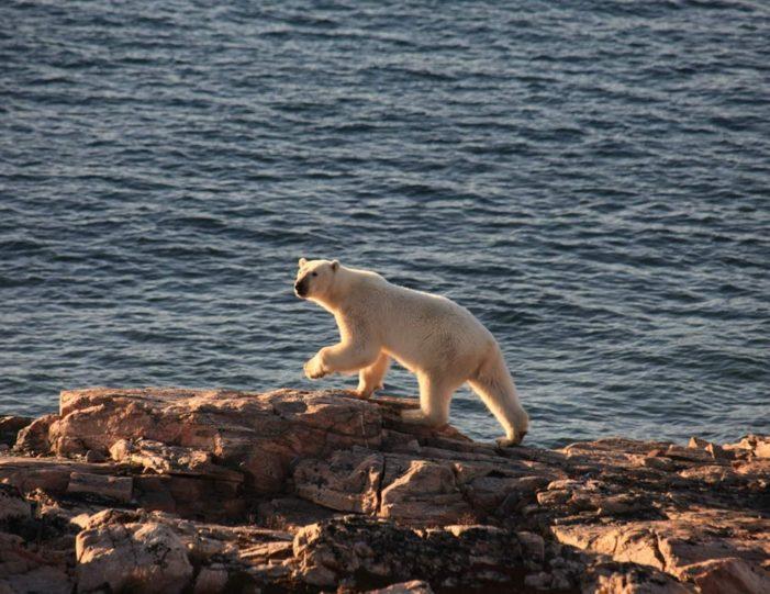 arctic-wildlife-safari-8-days-ittoqqortoormiit-east-greenland-Guide to Greenland4